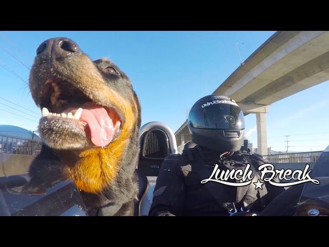 """Lunch Break"" -Rottweiler and Ariel Atom"