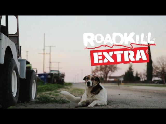 A Tribute to Big Joe the Shop Dog -Roadkill Extra