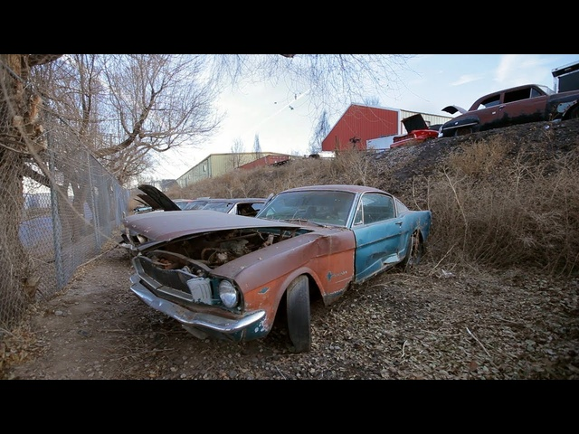 Steve Spots a1965 Mustang 2+2 Fastback -Junkyard Gold Preview Ep. 4