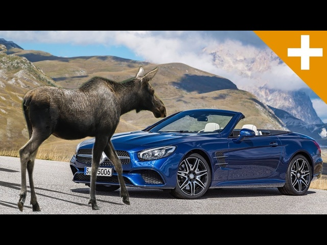 How A Moose Nearly Ended Mercedes - Carfection +