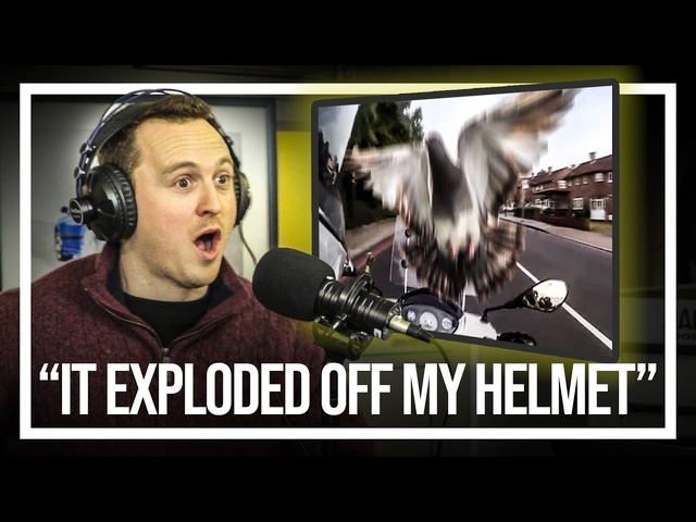 How ADumb Pigeon Nearly Ended Me | Your Car Stories